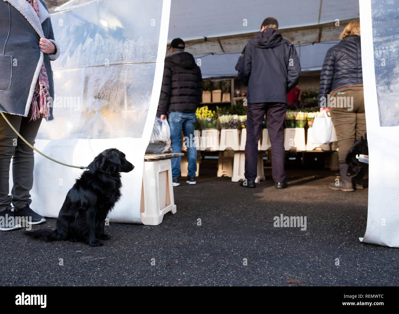 naarden vesting, netherlands, 19-january 2019: dog waits outside flower stall on winter market in naarden vesting - Stock Image