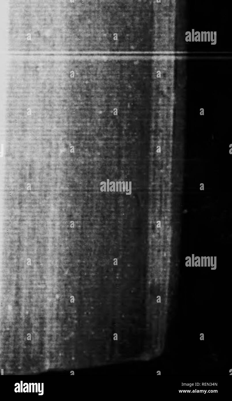 Medullary Rays Stock Photos & Medullary Rays Stock Images - Alamy