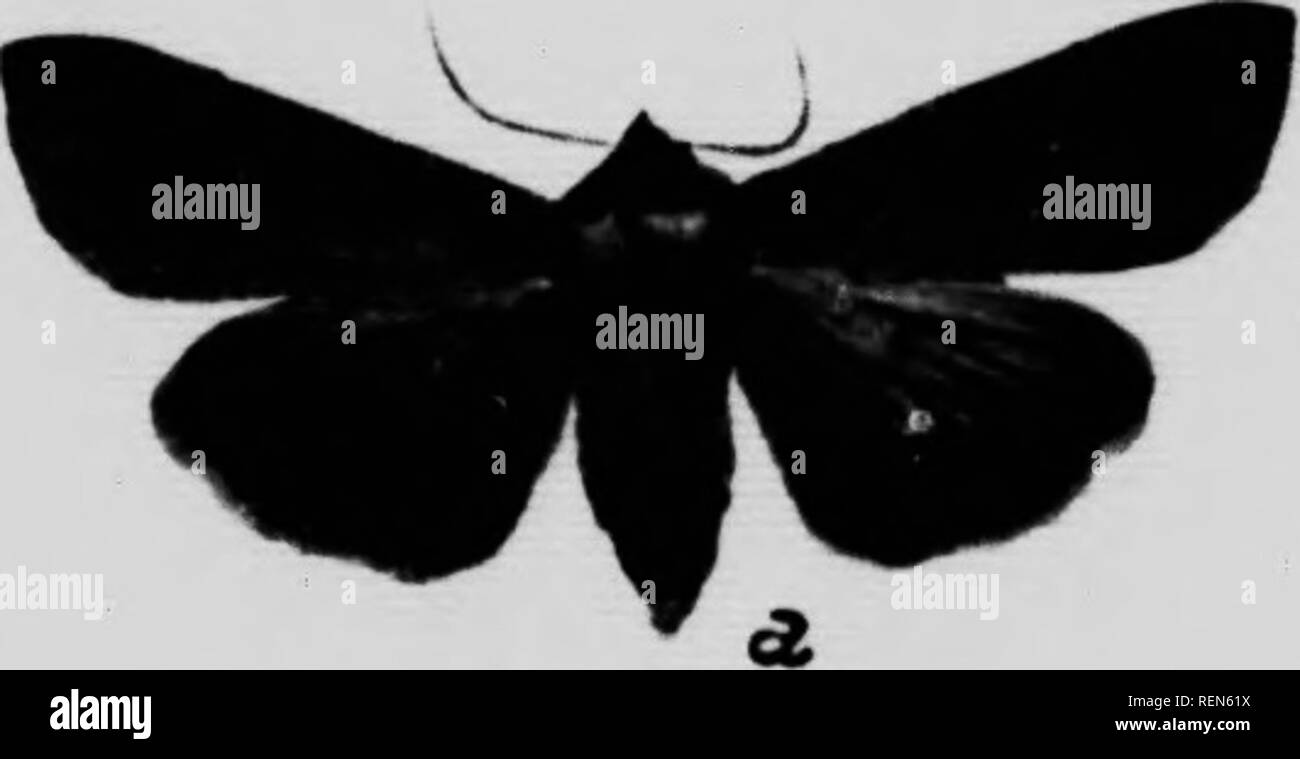 95e6b1f8e471 Search Results for Black Moth With Red Spots Black & White Stock Photos and  Images