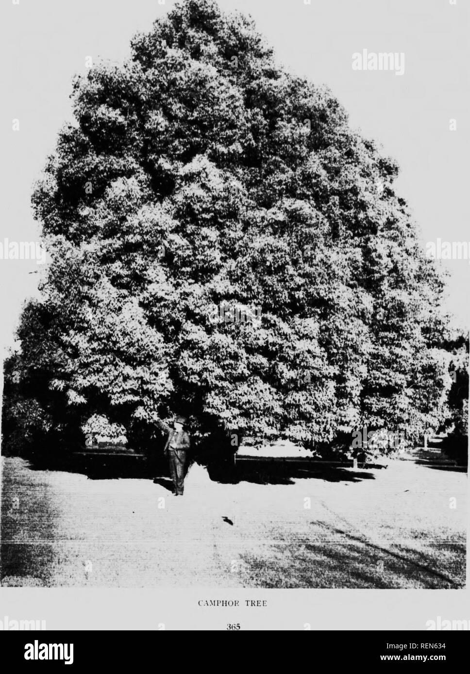 L Herbier Du Midi Produits Naturels llir black and white stock photos & images - alamy