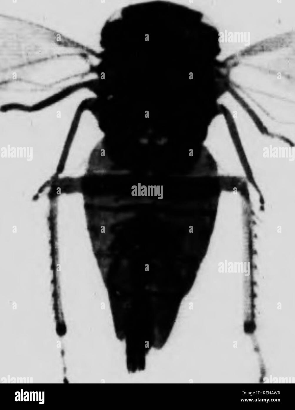 Smallest Form Black and White Stock Photos & Images - Alamy