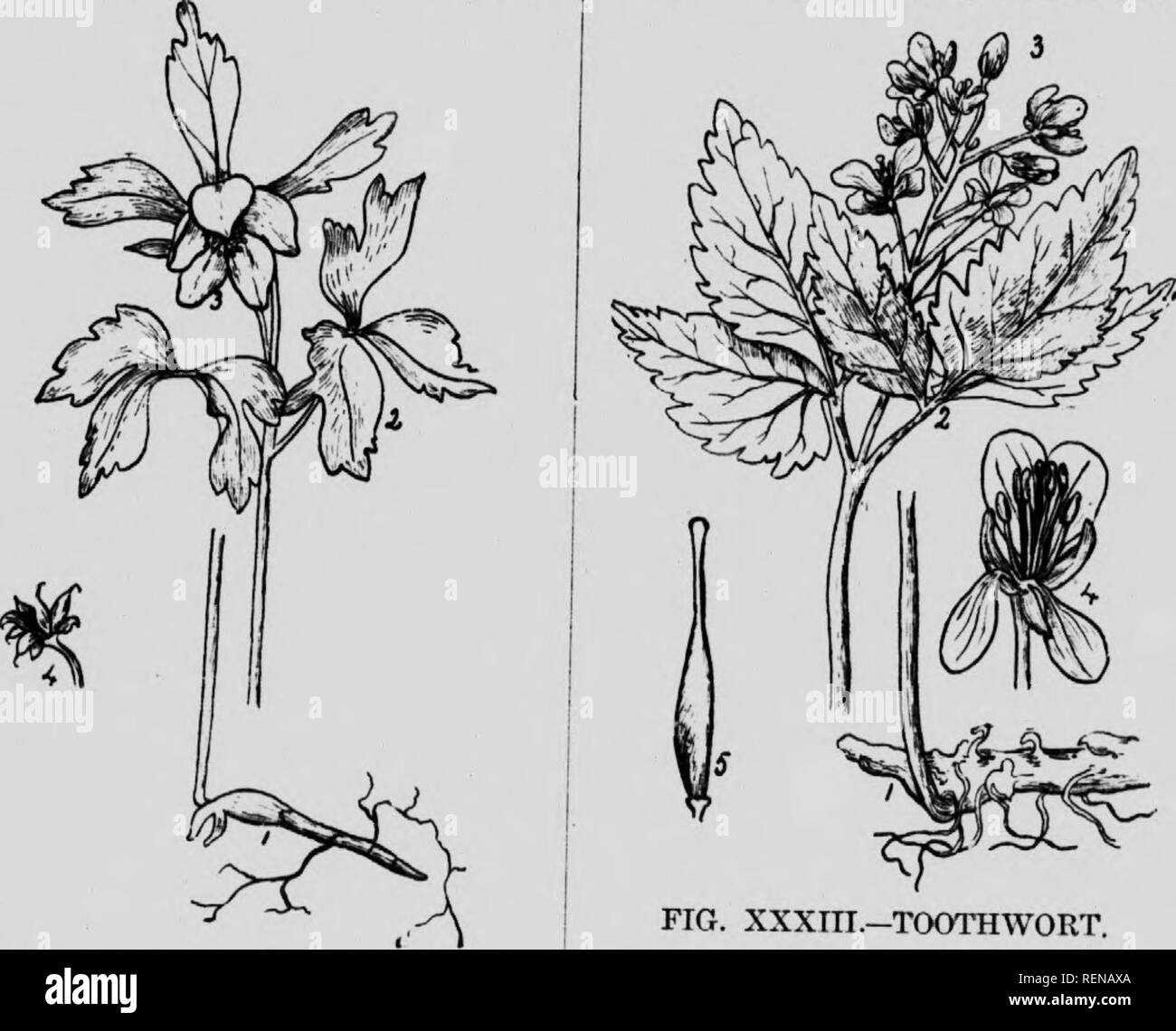 Arctic Spring Flowers Black And White Stock Photos Images Alamy