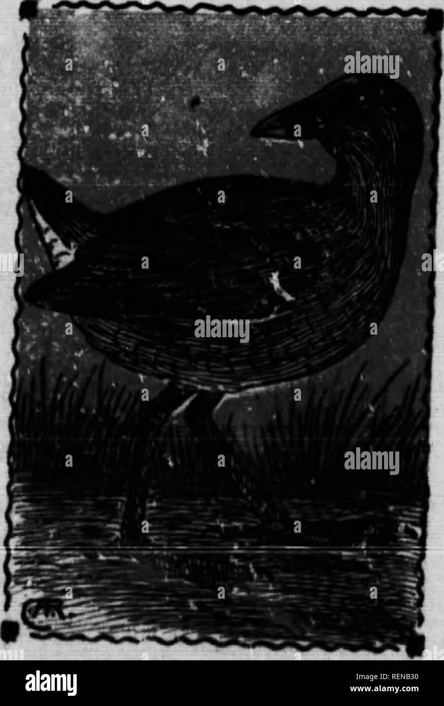 Array - bird guide  microform   waterfowl  birds  gibier d u0027eau      rh   alamy com