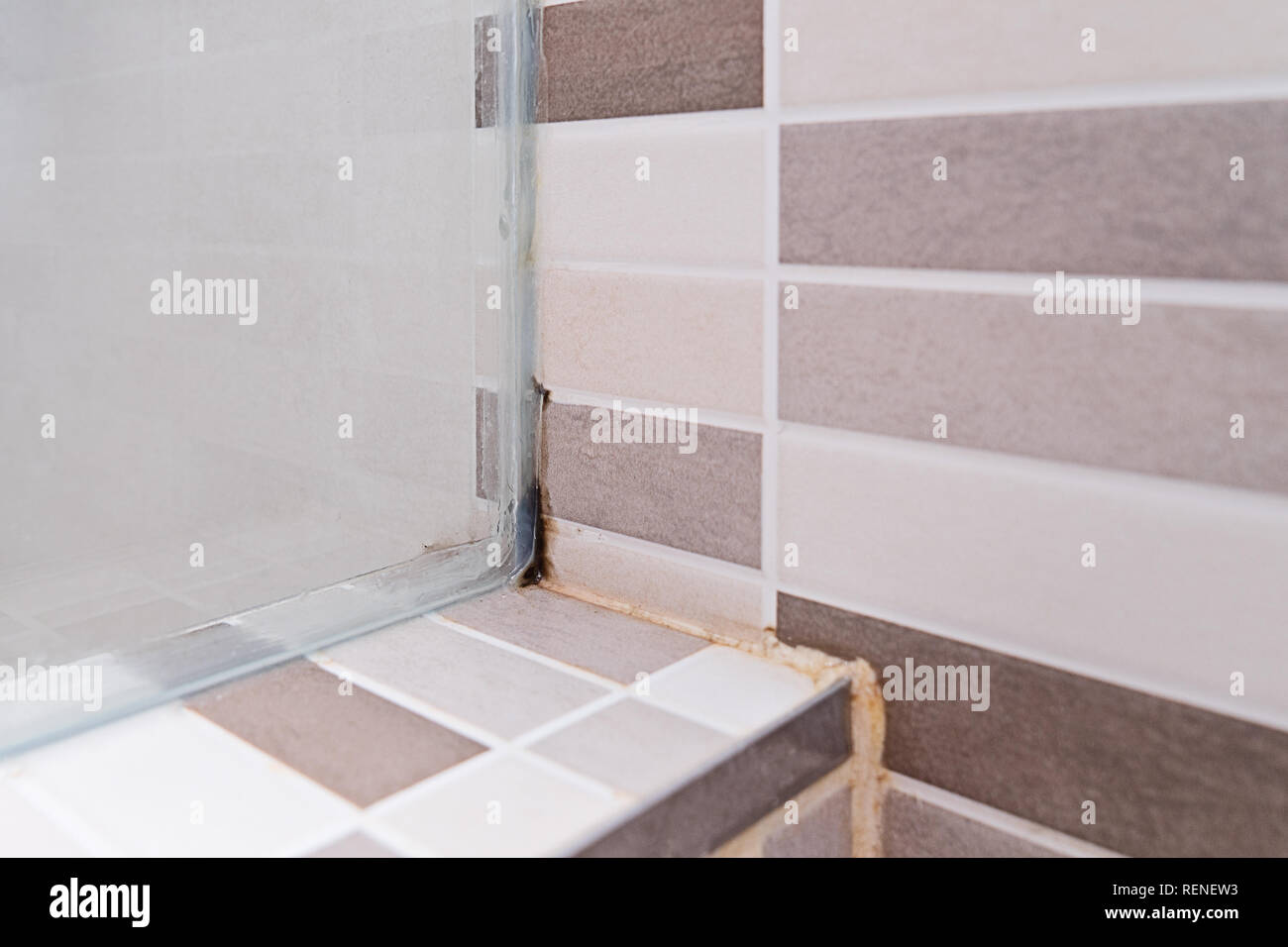 Black mold on tile in shower cabin. Poor ventilation, humidity, condensation cause fungus on the walls, close up. Unhygienic dirty mildew in bathroom  Stock Photo