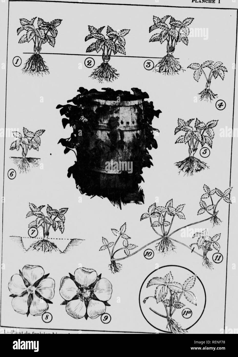 . De la culture des arbustres fruitiers [microforme]. Arboriculture fruitière; Fruit-culture. PLANCHE I. ' î i ...u^h i ÎMrii pUiilt. :i.- TnilH'ntniii..'. l l»  .. ^ ri F î i ,. Please note that these images are extracted from scanned page images that may have been digitally enhanced for readability - coloration and appearance of these illustrations may not perfectly resemble the original work.. Pétraz, Francisque; Lavoie, J. -H. (Joseph-Henri), né 1887; Québec (Province). Département de l'agriculture. [Québec] : Dép. de l'agriculture - Stock Image