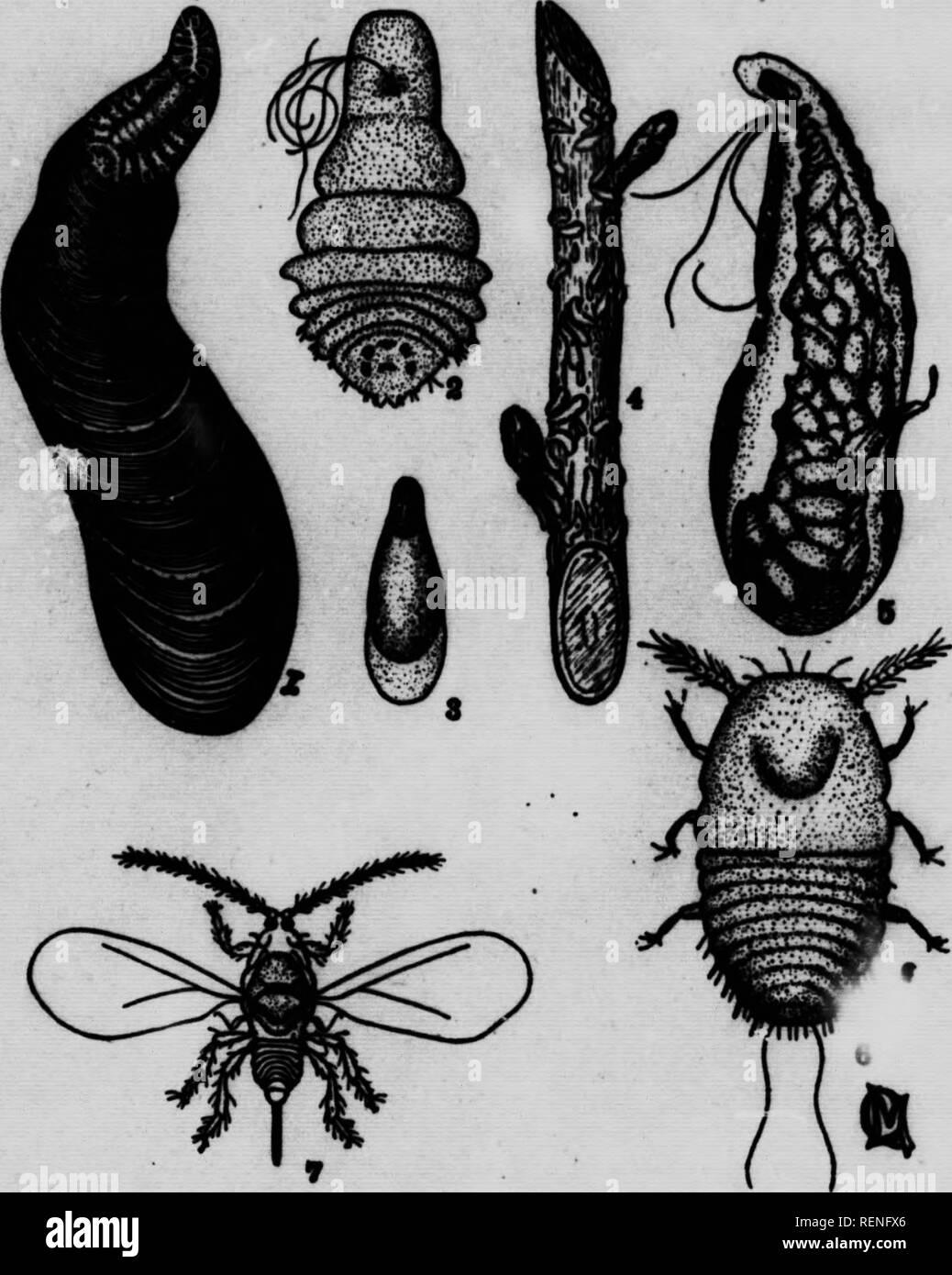 Geschossene Jugendlich Insekt