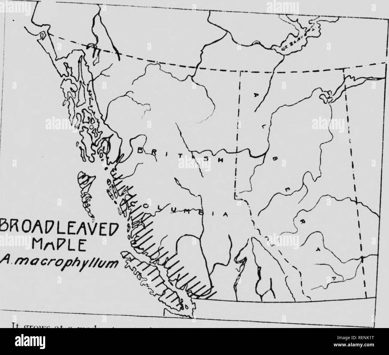 Native trees of Canada [microform]  Trees