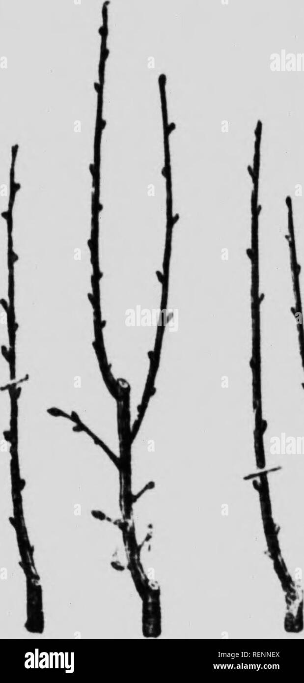 Lofty Trees Black and White Stock Photos & Images - Alamy