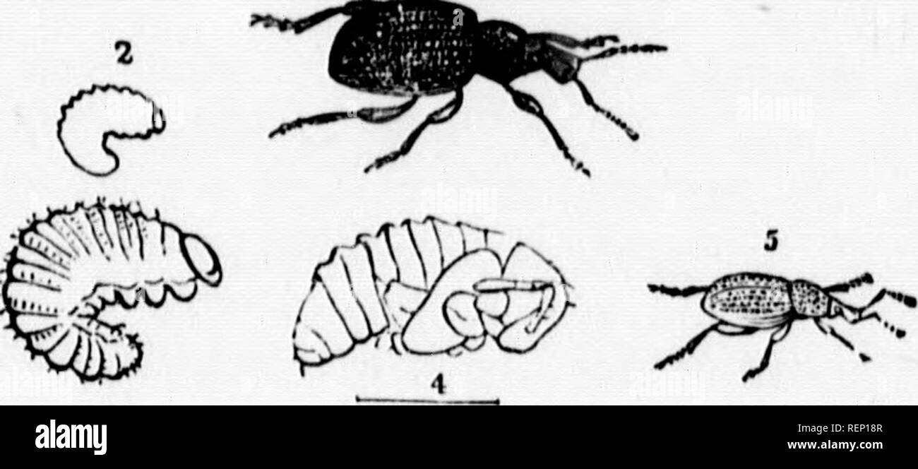 A manual of injurious insects [microform] : with methods of