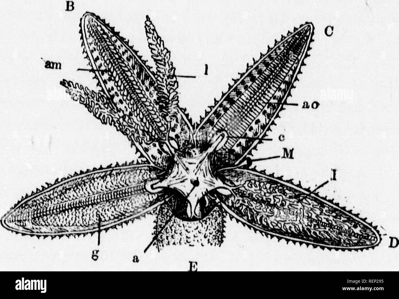 A textbook of invertebrate morphology [microform