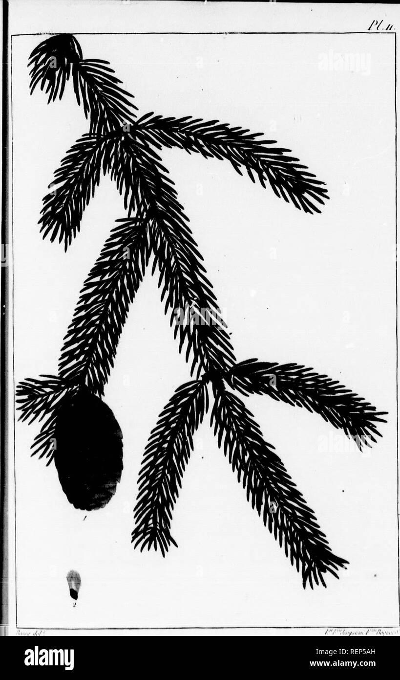 . Histoire des arbres forestiers de l'Amérique septentrionale [microforme] : considérés principalement sous les rapports de leur usage dans les arts et de leur introduction dans le commerce ainsi que d'après les avantages qu'ils peuvent offrir aux gouvernemens en Europe et aux personnes qui veulent former de grandes plantations. Forêts et sylviculture; Pin; Noyer; Arbres; Ressources naturelles; Sapins; Forests and forestry; Pine; Walnut; Trees; Natural resources; Fir. /â â â ; â .i.j... .:/ -/ùx- il 1  il ftii  4. Please note that these images are extracted from scanned page images tha Stock Photo