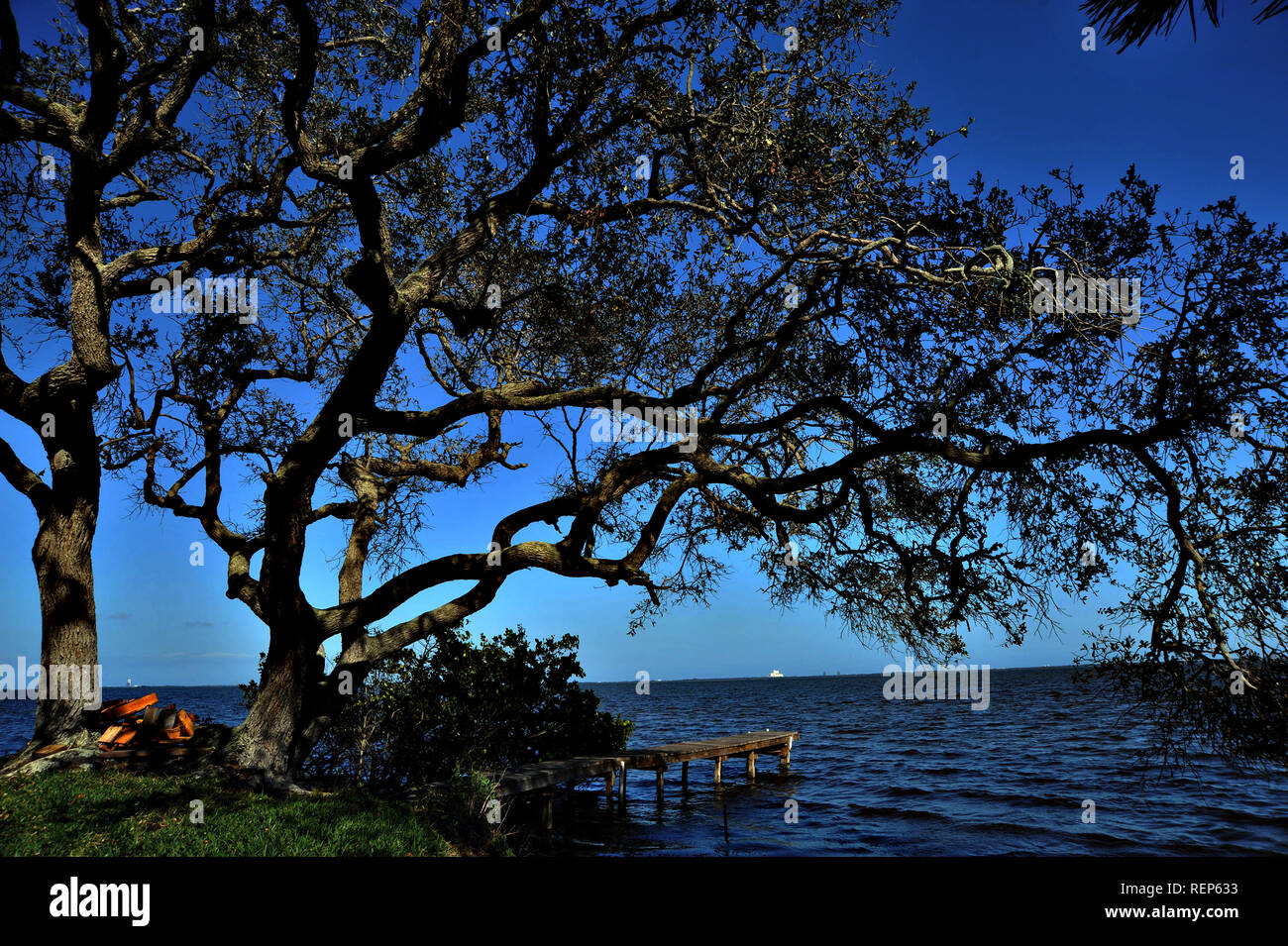 Shimmering Tree on River with Wooden Dock - Stock Image