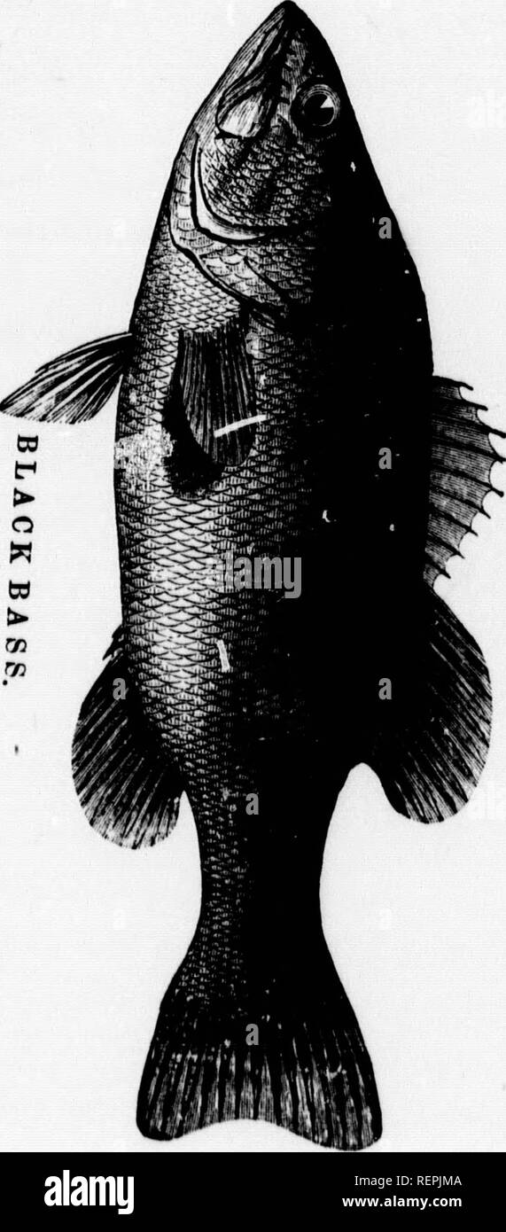 11862cbc6a02ab . American fish-culture  microform    embracing all the details of  artificial breeding and rearing of trout