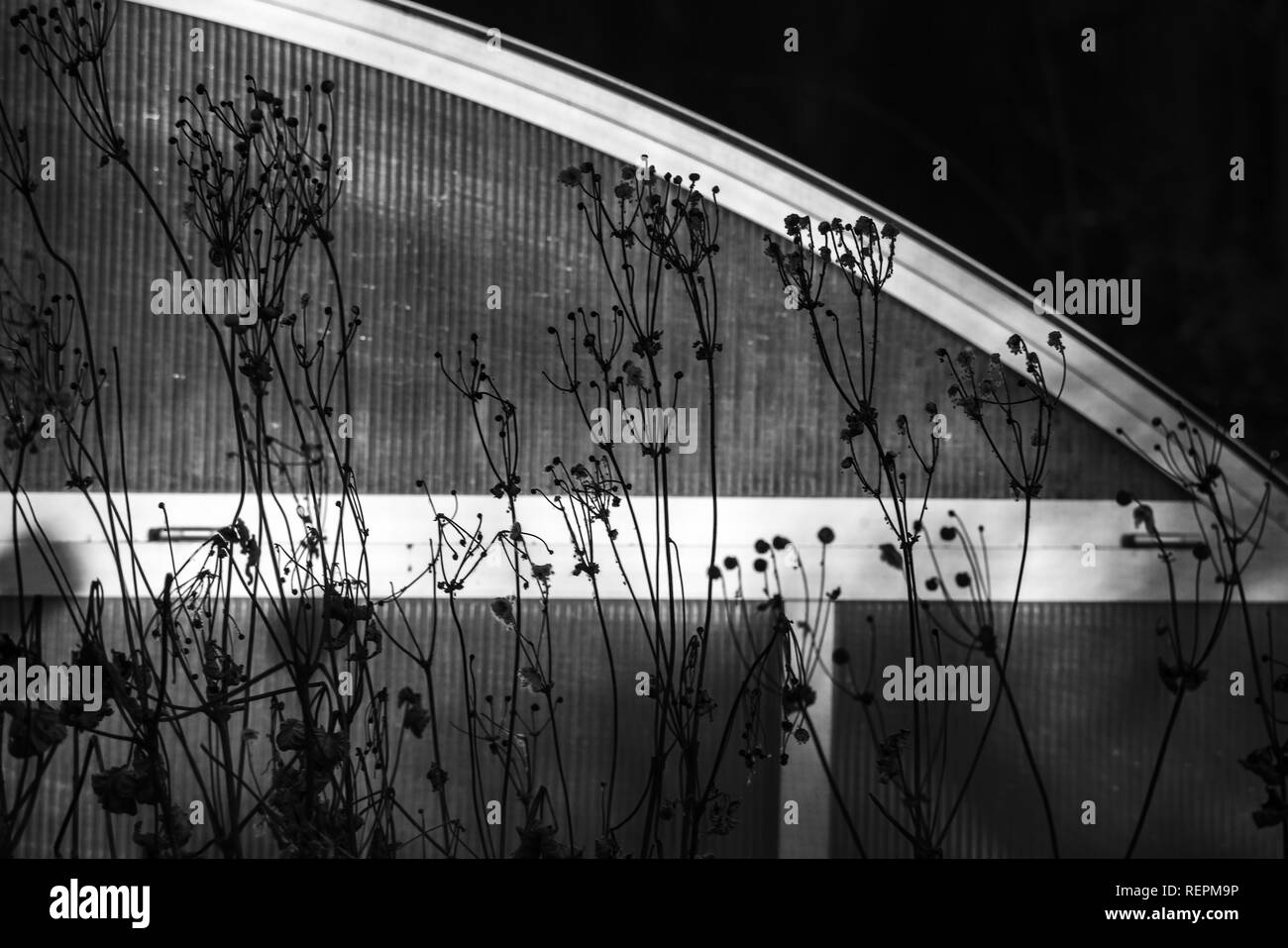 monochrome melancholic wintermood photo of dried plants and the silver frame of a swimming pool - Stock Image