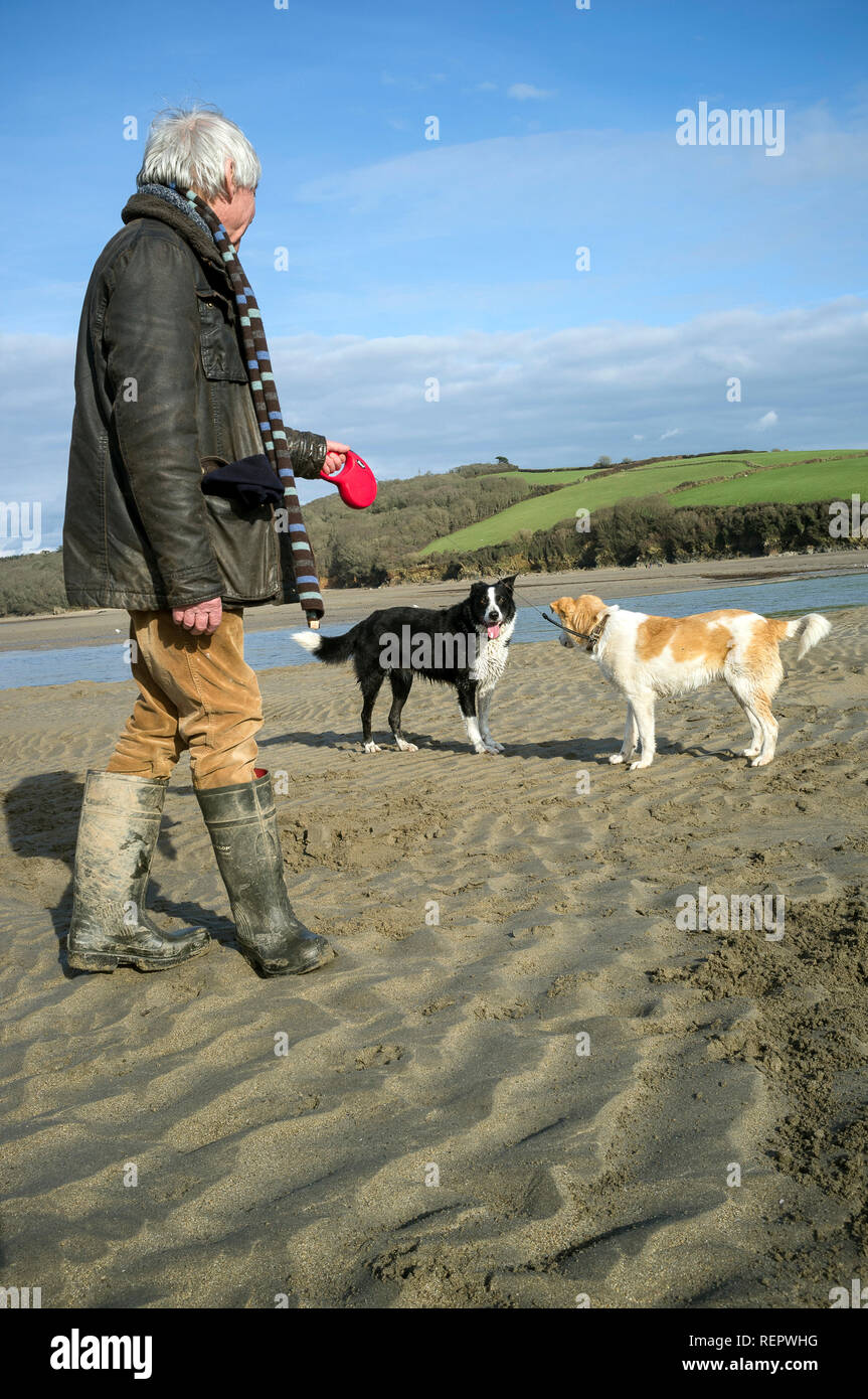 dog walking on Wonwell Beach, South Hams, Devon, UK - Stock Image