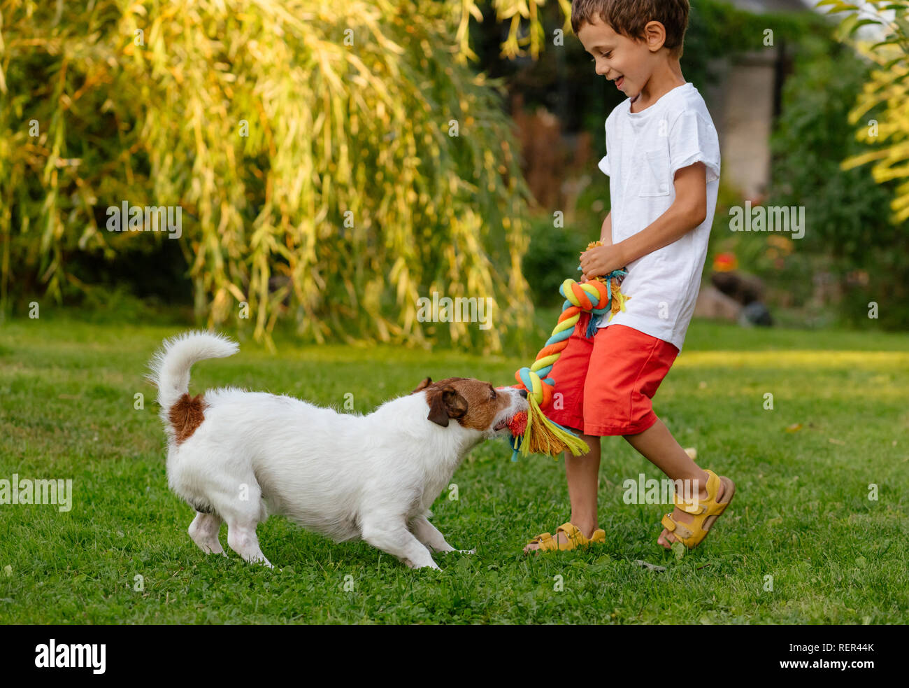 Happy laughing kid boy playing with his dog pulling doggy cotton rope toy - Stock Image