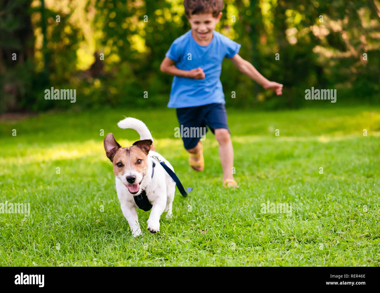 Naughty dog with leash on ground running from his handler Stock Photo