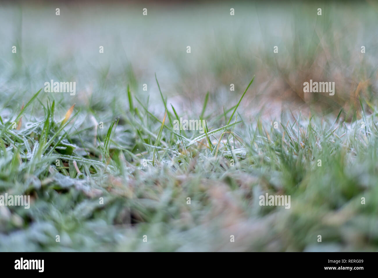 Poole, Dorset, UK. 23rd January 2019. Frosty grass and rooftops on a January morning on the south coast of England as the UK enters a cold snap. Credit: Thomas Faull/Alamy Live News Stock Photo