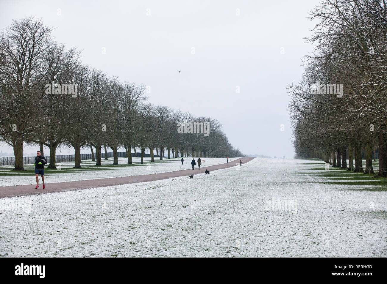 Windsor, UK. 23rd Jan, 2019. UK Weather: The year's first sprinkling of snow alongside the Long Walk in Windsor Great Park. Today's forecast for Berkshire is cold, with sunny spells and a risk of wintry showers. Motorists have been warned to take care because of hazardous driving conditions. Credit: Mark Kerrison/Alamy Live News Stock Photo