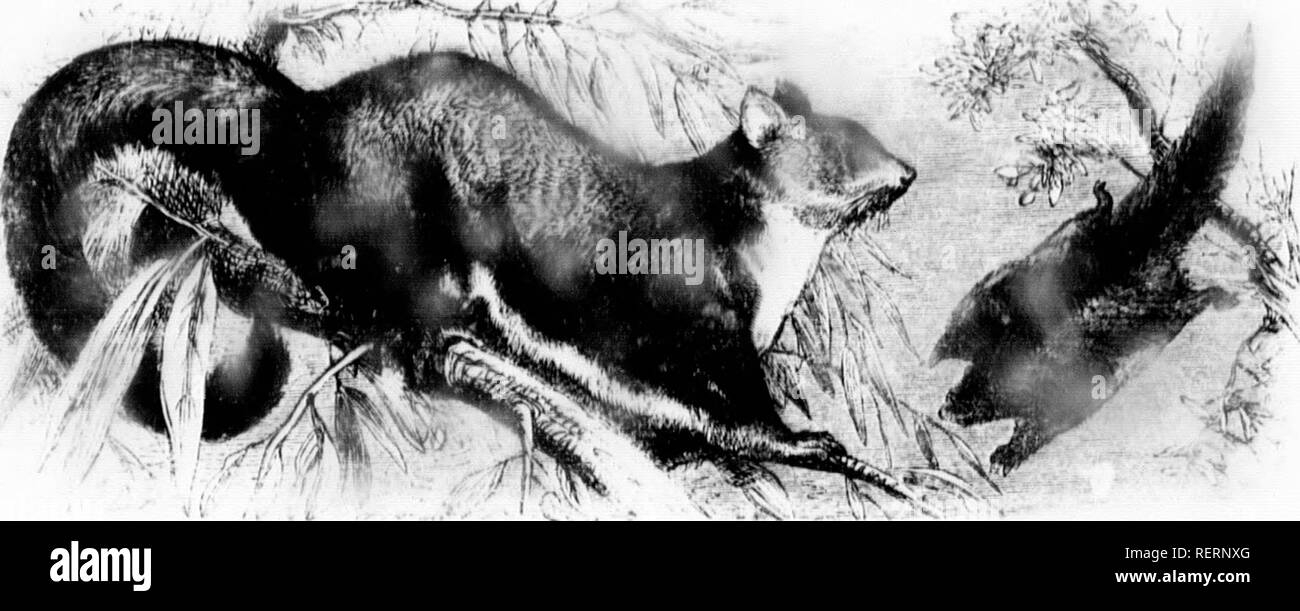 The illustrated natural history [microform]  Mammals