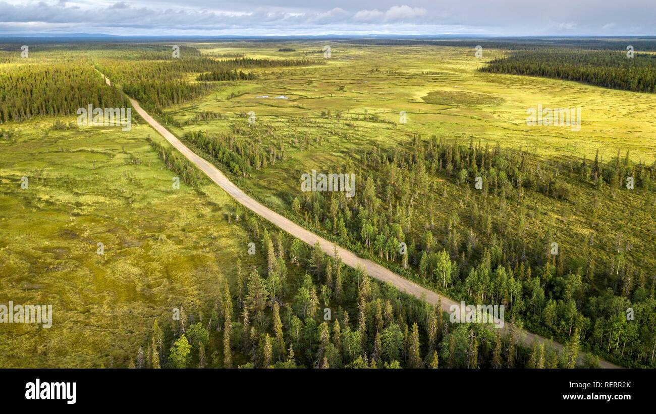 Drone view, aerial photo, gravel road runs diagonally through boreal, arctic forest with Pines (Pinus) in wetland, moor - Stock Image