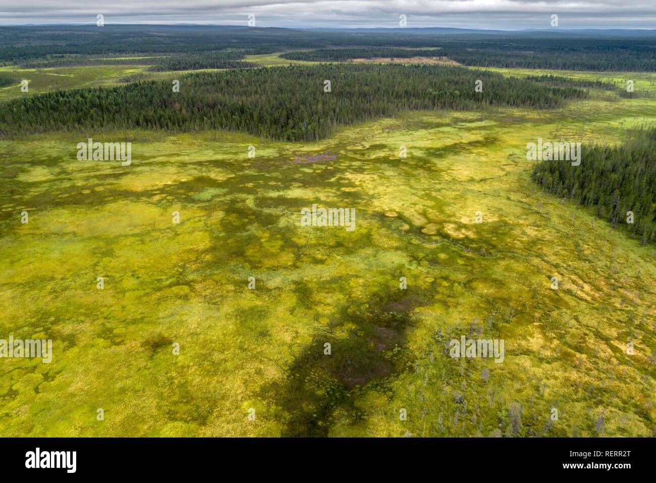 Drone view, aerial photo, boreal, arctic forest with conifers in wetland, moor, Savukoski, Lapland, Finland - Stock Image