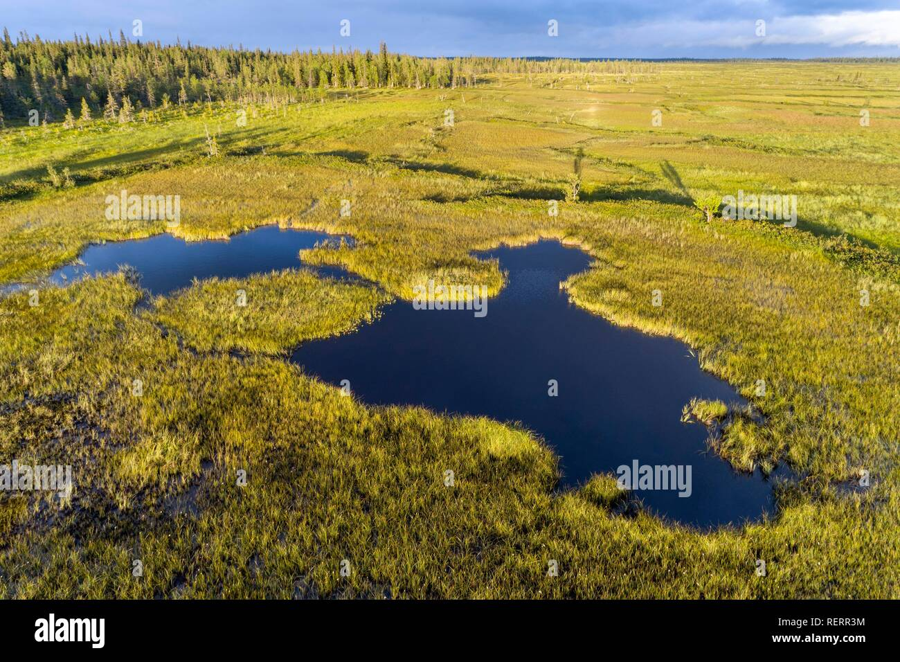 Drone view, aerial photography, lake in wetland, bog, boreal, arctic conifers, Sodankylä, Lapland, Finland - Stock Image