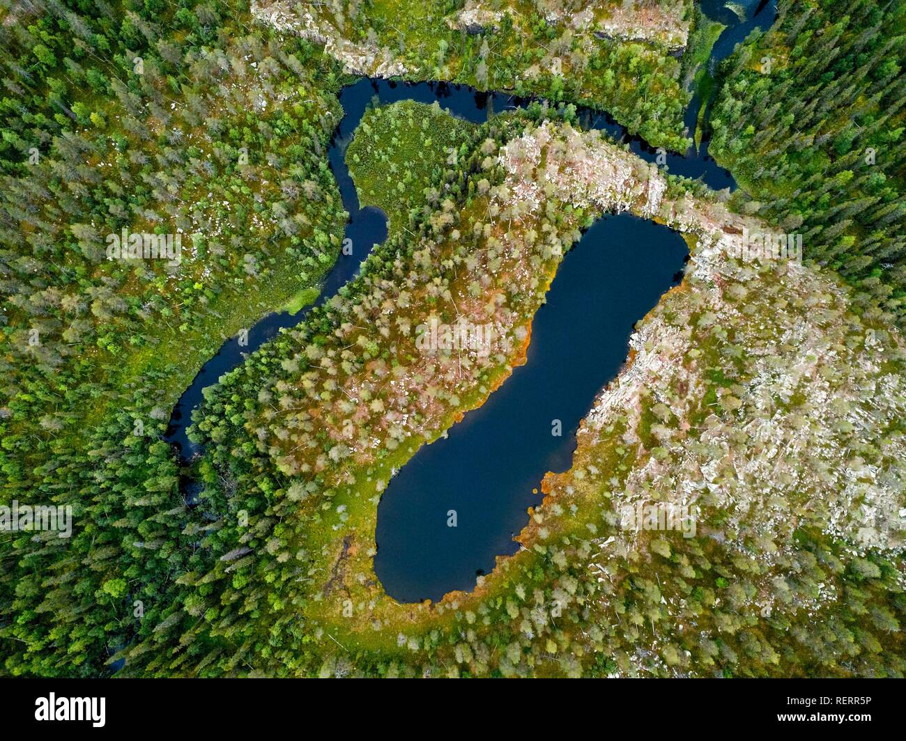 Drone view, aerial photo of a shoe shaped lake and river in the boreal, arctic forest with conifers, Pines (Pinus) in - Stock Image