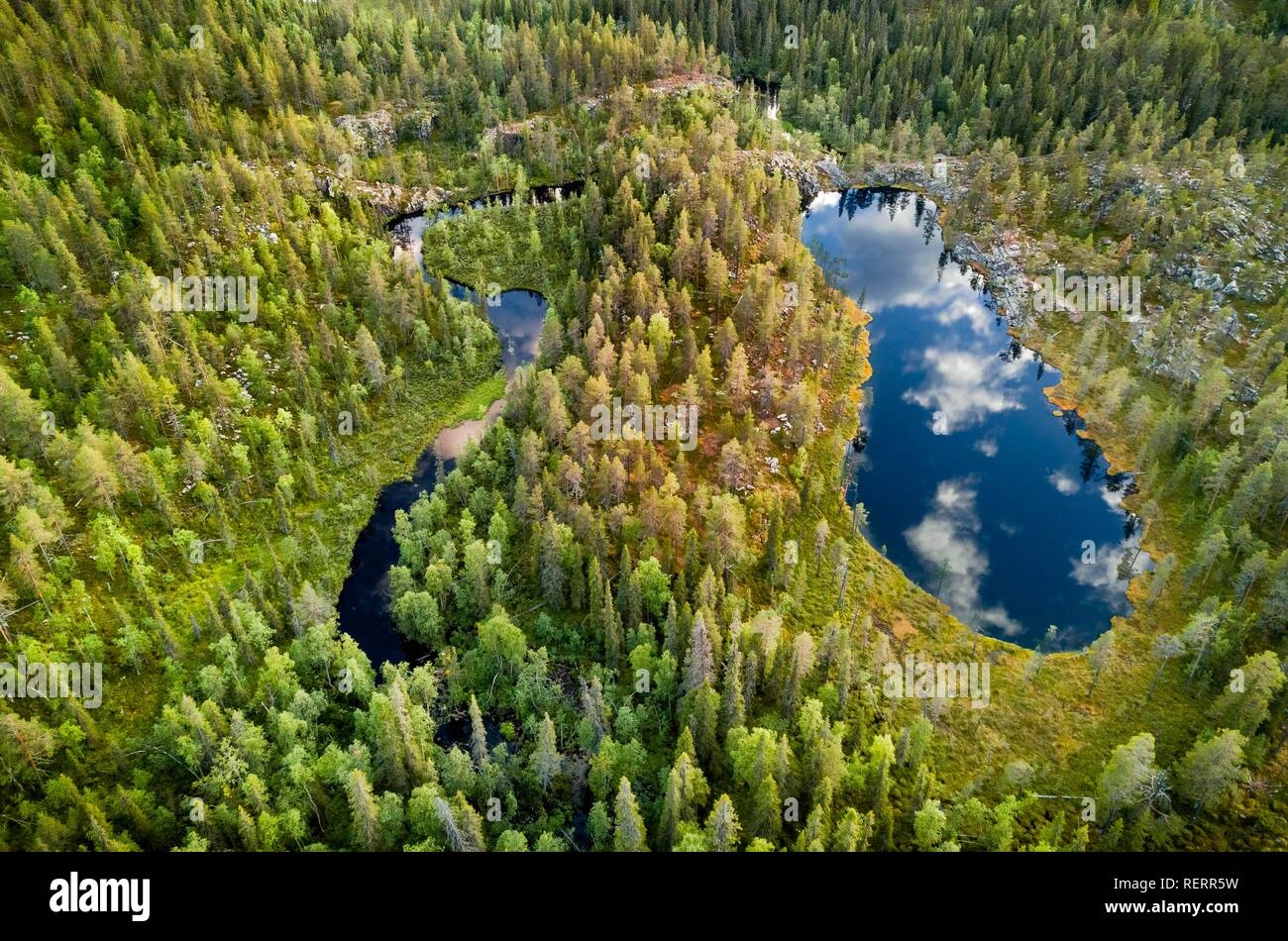 Drone view, aerial photo, clouds reflected in shoe shaped lake in boreal arctic forest with conifers, Pines (Pinus) in - Stock Image