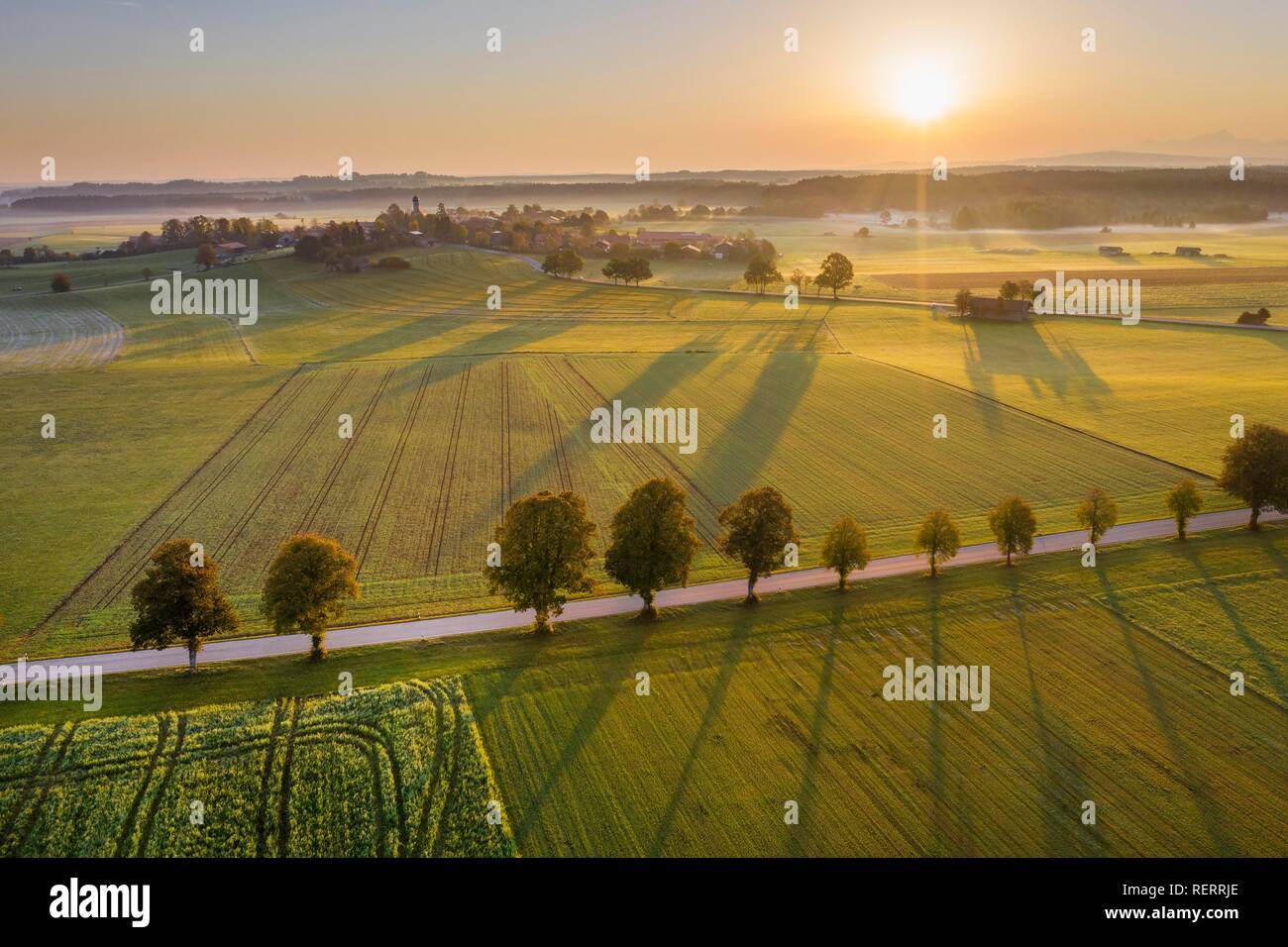 Country road with tree row at sunrise, punching at Dietramszell, drone view, Tölzer Land, Upper Bavaria, Bavaria, Germany - Stock Image