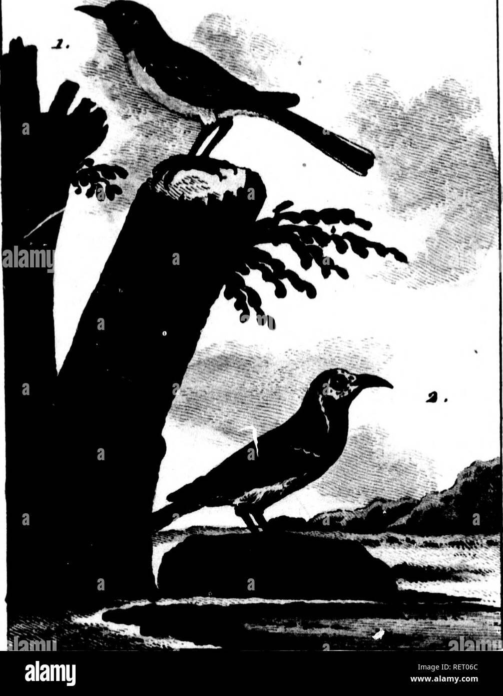 . Histoire naturelle de Buffon [microforme] : classée par ordres, genres et espèces, d'après le système de Linné avec les caractères géné riques et la nomenclature Linnéenne. Sciences naturelles; Ornithologie; Natural history; Ornithology. »»- S<f, .I»i» Â« mm ra,f. 2i!S- Ton, . xr. %i. Jieit'eut f/e/ f^ Tttrdteu Jcu/v . X. ToA LAVANniKHE. a.LA BKllGKllONETTE , *â .. Please note that these images are extracted from scanned page images that may have been digitally enhanced for readability - coloration and appearance of these illustrations may not perfectly resemble the original  - Stock Image