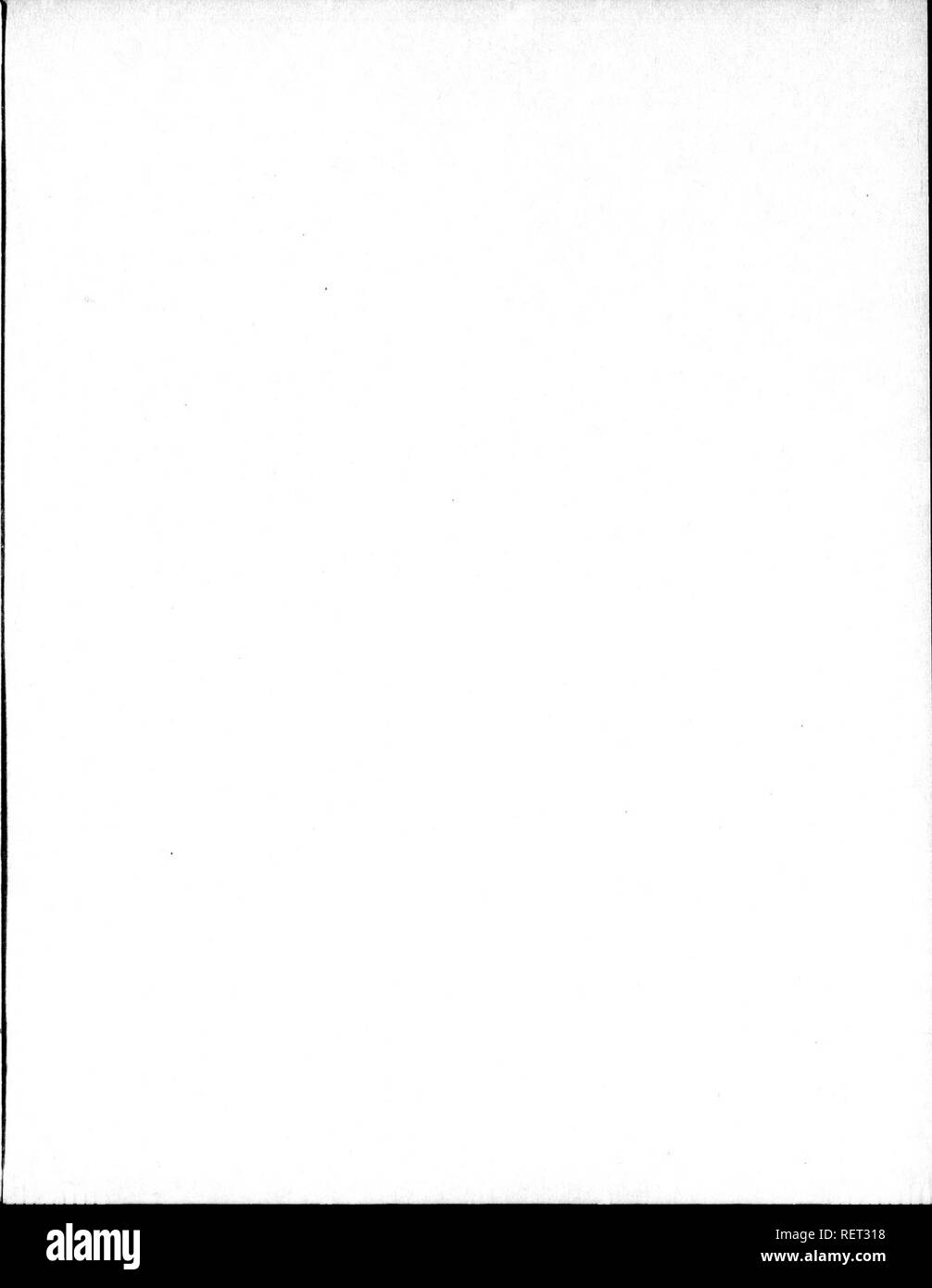 . Histoire naturelle, générale et particulière [microforme] : servant de suite à l'histoire des animaux quadrupèdes. Sciences naturelles; Natural history. . Please note that these images are extracted from scanned page images that may have been digitally enhanced for readability - coloration and appearance of these illustrations may not perfectly resemble the original work.. Buffon, Georges Louis Leclerc, comte de, 1707-1788. A Paris : De l'Imprimerie royale - Stock Image