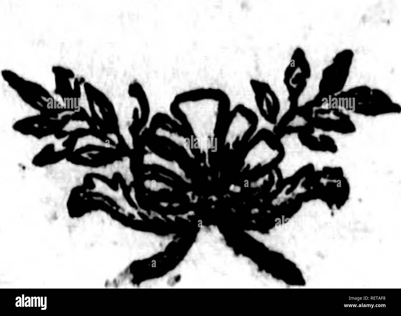 """. Histoire naturelle, générale et particulière [microforme] : servant de suite à l'histoire des animaux quadrupèdes. Sciences naturelles; Natural history. V , 170 Supplément à l'HtJIoire LE PHOQUE LAKTAK DE KAMTSCHJTKJ. '-^^-^""""^^^^Sixième efpèce. ^nx >v-v JLa sixième espèce eft celle que ^. habitans de Kamtfchatka appellent /j>t/'/- rû;t (u); elle ne fe prend cjiraii-QcU du cinquantc-fixicme degré clc utitude, foit dans la mer de Pengina, foit dans l'océan oriental , & paroît être une ^ des plus grandes du genre des pho- ques. -. .« fnj Kracheninnikow ; Hiftoirc g - Stock Image"""