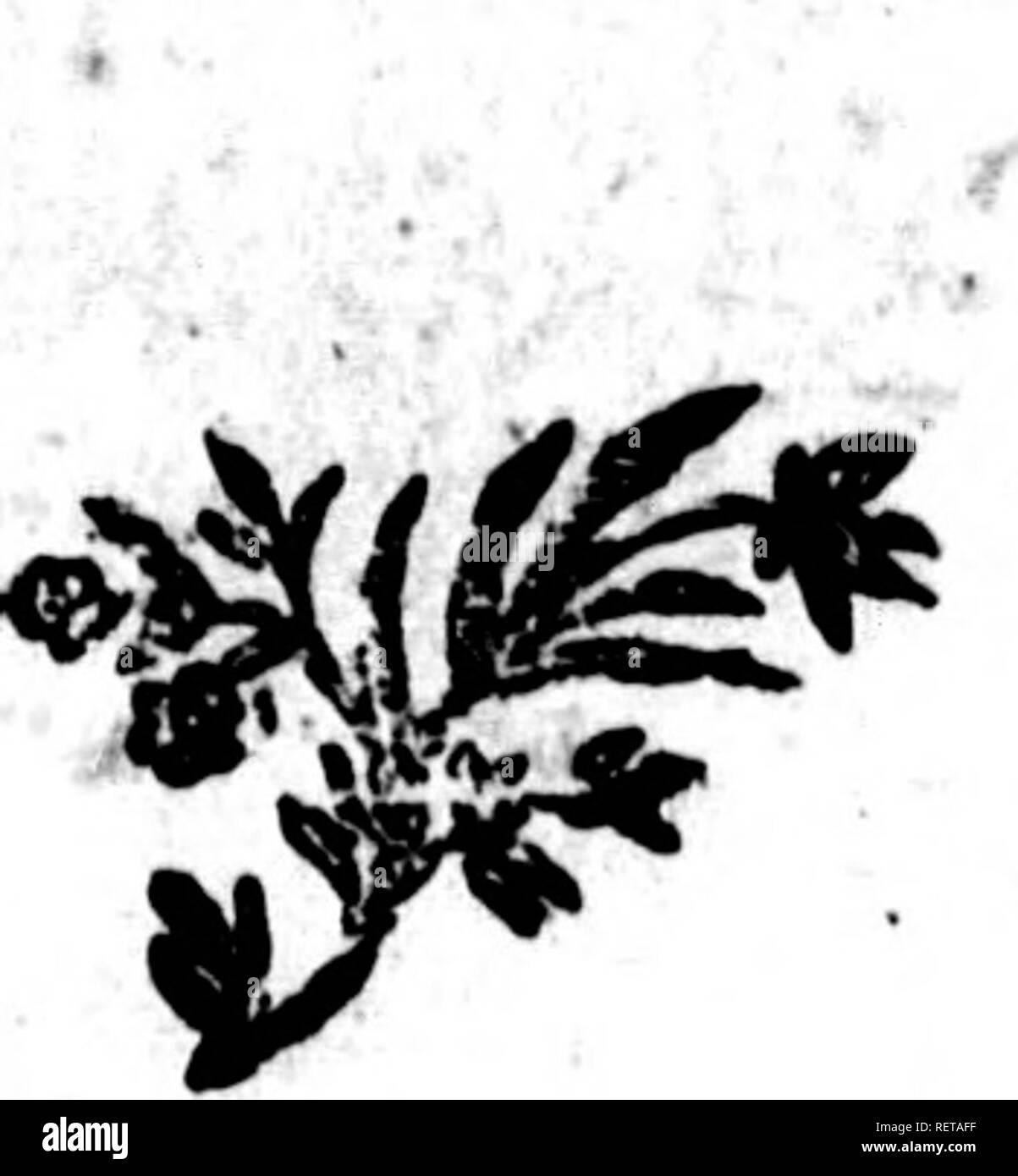 """. Histoire naturelle, générale et particulière [microforme] : servant de suite à l'histoire des animaux quadrupèdes. Sciences naturelles; Natural history. des Animaux quairupèdts. K39 LE PHOQUE NEITSOAK. Cinquième efpèce. L A CINQUIÃME ESPÃCE dePhoque lans oreilles externes, eft appellée niet"""" foak par les Groenlaiidois *, il eft plus petit que les précédens^ Ton poil eft; mêlé de foies brunes & aufïï rudes que , celles du cochon -, la couleur en eft . variée par de grandes taches , & il. eft hérilFé comme celui de Tours-ma- riiî (t). vTfxv â¢.* â .' i 'i (t) Pho - Stock Image"""