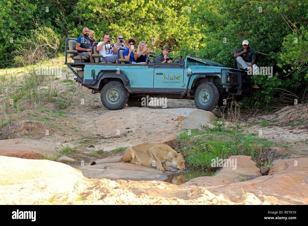 Safari vehicle, Private Game drive with tourists in Safari Vehicle, Sabi Sand Game Reserve, Kruger Nationalpark,South Africa, Africa Stock Photo