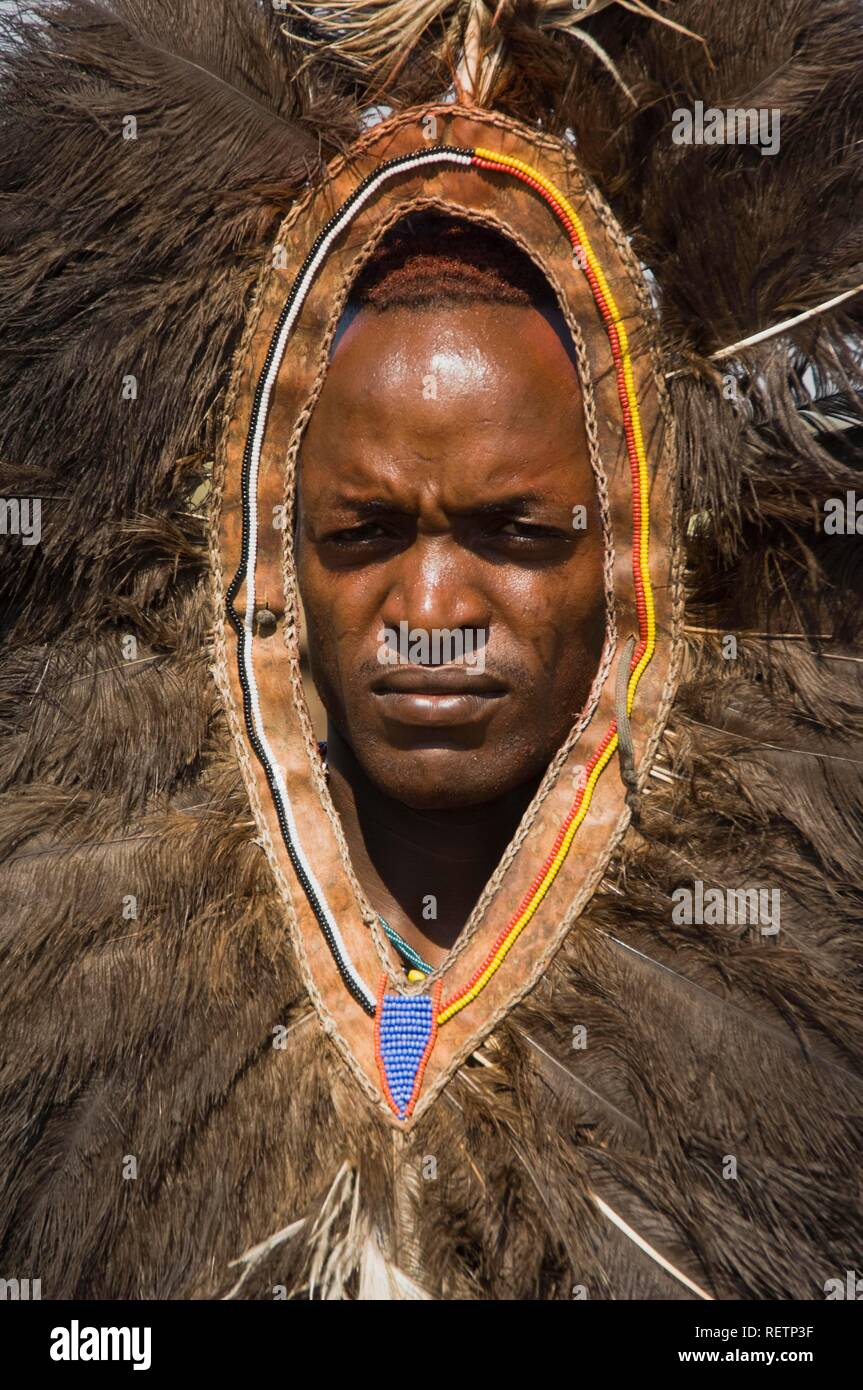 Masai warrior wearing an ostrich feather headdress, Masai Mara, Kenya, East Africa - Stock Image
