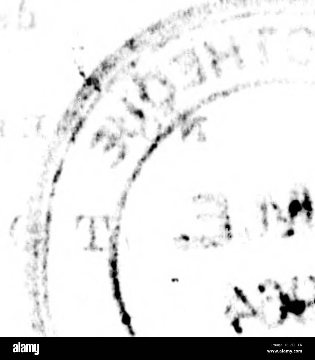 """. Histoire naturelle de Buffon [microforme] : classée par ordres, genres et espèces, d'après le système de Linné avec les caractères géné riques et la nomenclature Linnéenne. Sciences naturelles; Anthropologie; Natural history; Anthropology. t*. i 'î.:. Adii j » ⢠- Â« ili:'i < , A Ã. i. /â (  âºÂ» / »â î Ci fi - 1 ;ç Â«:'J Ij .-*â¢â ^ ' ⢠J iO :iii » ;⢠4. u ⢠1. ;. ir : K. /^ .} c-tii H s } f.d. 'in!f""""'- (?i, J J'*-1f .:! .1; ;i Tio; ,f: t) i T 1 11 .>. â¢.rir.-.uiMiî-a/M't Wri"""" '/ i. '^6^ * â s 'â 4*Mrfi#1 w Â«4.v,'>r â¢tnÂ«Â«>WM-.Â«M. ⢠""""^ â - Stock Image"""