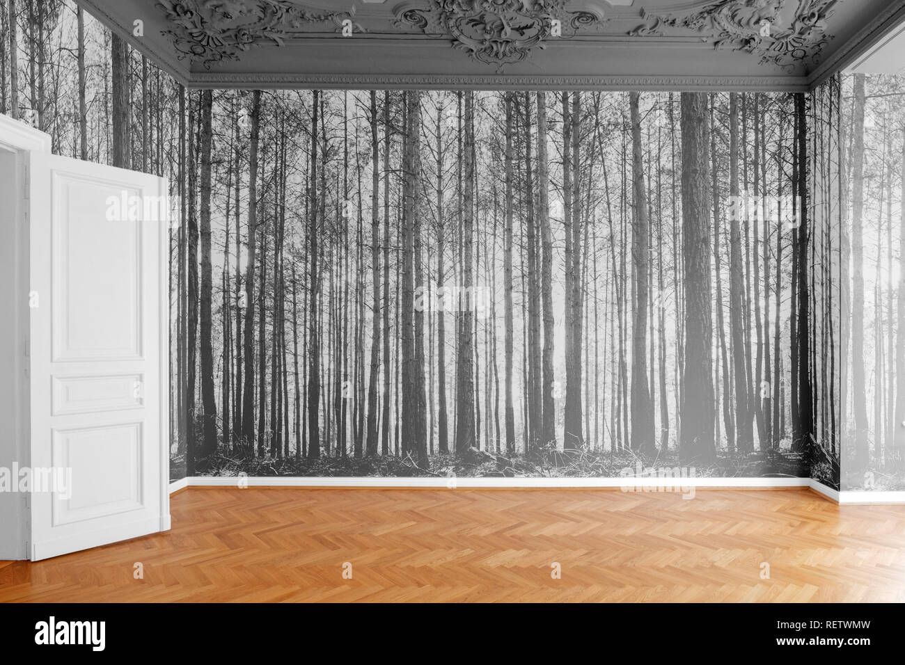 empty room with photo wallpaper with  forest landscape photography - Stock Image