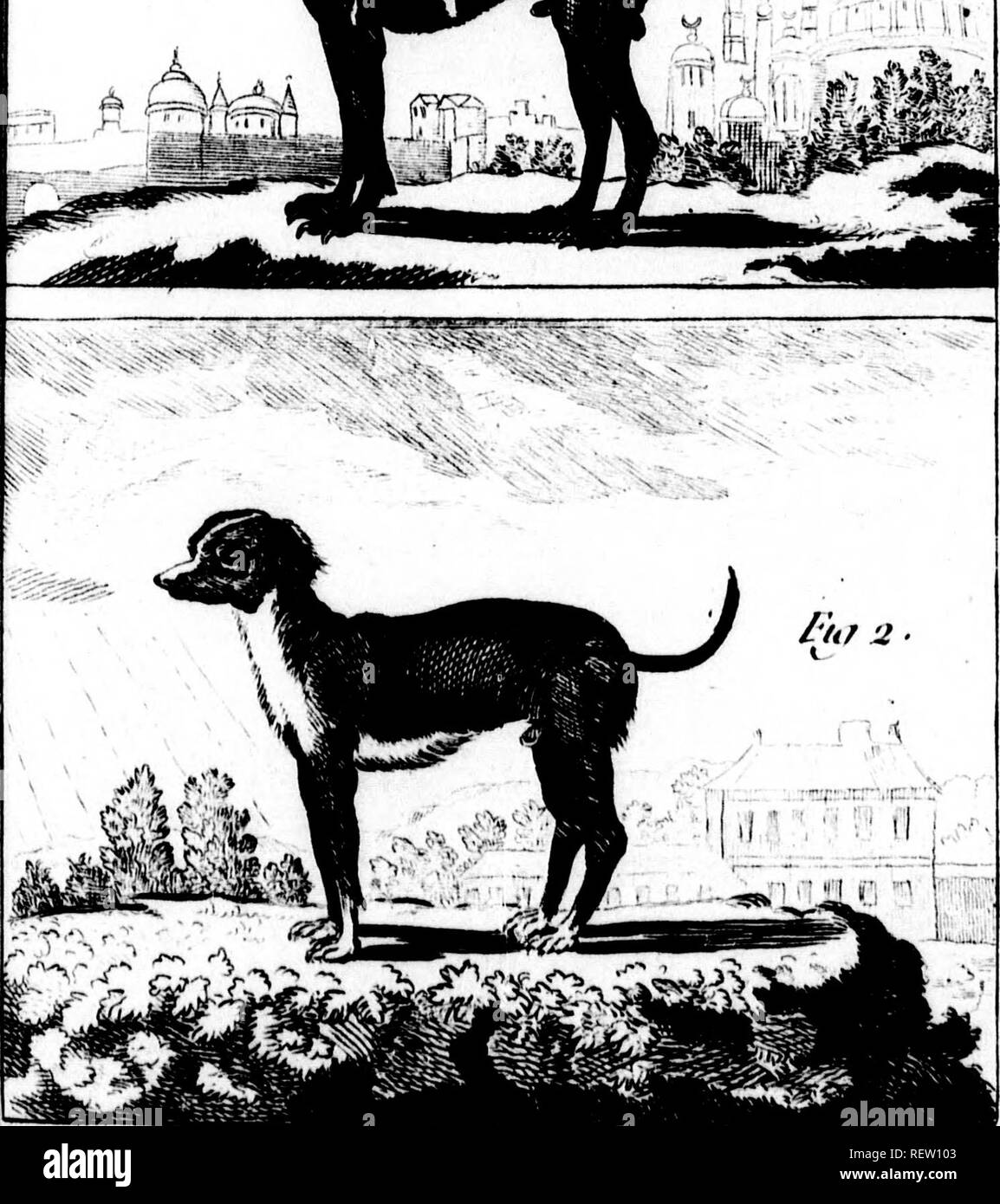 . Histoire naturelle, générale et particulière [microforme]. Sciences naturelles; Natural history. n LK CHIEN TURC /i < '7'z./l' '^fï^î^T'?^^ /.// (y. <'mKN TL'uc .Ml, ris n. Wunt y) ,'uil'. Please note that these images are extracted from scanned page images that may have been digitally enhanced for readability - coloration and appearance of these illustrations may not perfectly resemble the original work.. Buffon, Georges Louis Leclerc, comte de, 1707-1788. A Paris : De l'Imprimerie royale - Stock Image