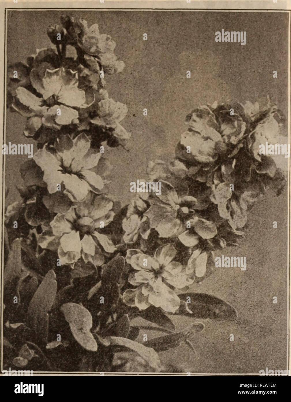 Dreer's wholesale price list / Henry A  Dreer   Nursery Catalogue