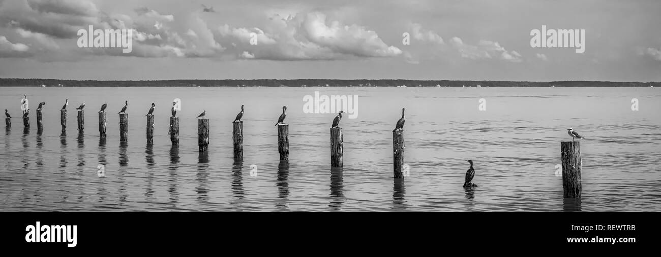 Virginia Water Black And White Stock Photos Images Alamy