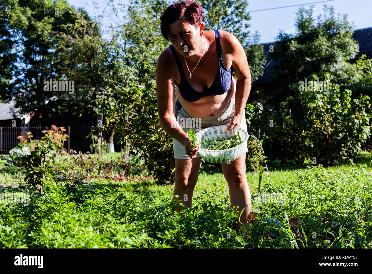 Front view of a woman wearing brassiere. The gardener holding a basket full of beans. Harvesting the crops produce in the garden. Backyard farming ide - Stock Image