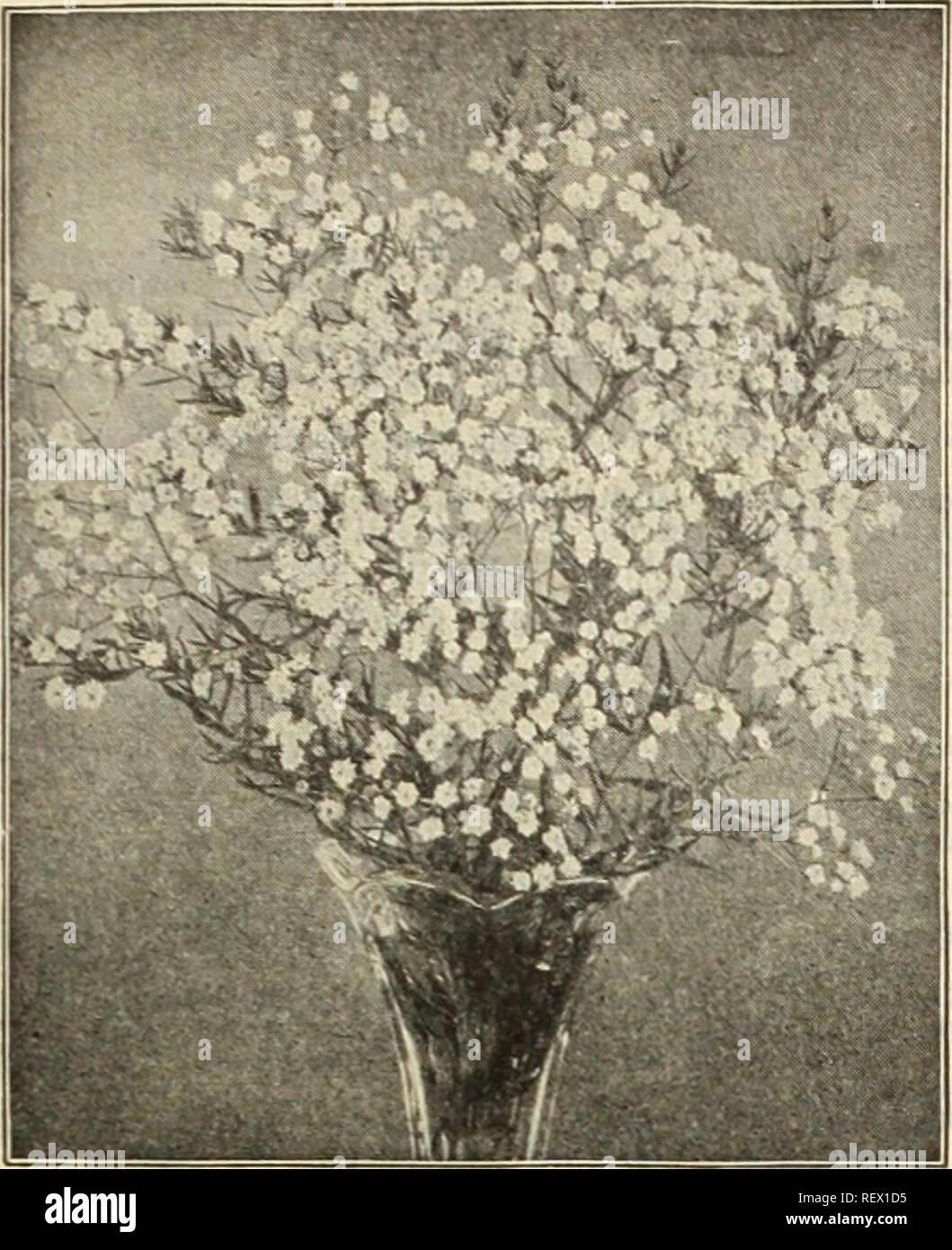 . Dreer's wholesale price list : seeds, plants, bulbs, etc. Bulbs (Plants) Catalogs; Flowers Seeds Catalogs; Vegetables Seeds Catalogs; Nurseries (Horticulture) Catalogs; Gardening Equipment and supplies Catalogs. HENRY A. DREER, PHILADELPHIA. PA., WHOLESALE PRICE LIST 45. GYPSOPHILA PANICULATA, FL. PL. Ornamental Hardy Bamboos. Each Doz. Metake Simoni Viminalis Fortunel Variegata. 60 50 50 25 $6 00 5 00 5 00 2 50 Fastuosa Aurea . Henonis . Aurlcoma Each Doz. 60 t6 00 60 6 00 60 6 00 60 6 00 Gunnera. Scabra. Fine strong plants in 5-inch pots of this grand foliage plant. 35 cents each; $3.50 pe Stock Photo
