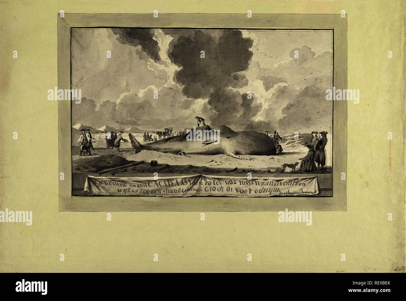 Walvis tussen Zandvoort en Wijk aan Zee aangespoeld, 1762. Aftekening van een Cachelot den 20 feb. 1762 tussen zandvoort en wyk op zee aan strand Gedreven. groot 61 voet 6 duym (title on object). Draughtsman: Jacobus Luberti Augustini (mentioned on object). Dating: 1762. Place: Northern Netherlands. Measurements: h 246 mm × w 378 mm. Museum: Rijksmuseum, Amsterdam. - Stock Image