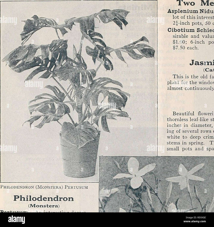 Dreer's midsummer list 1933  Flowers Seeds Catalogs