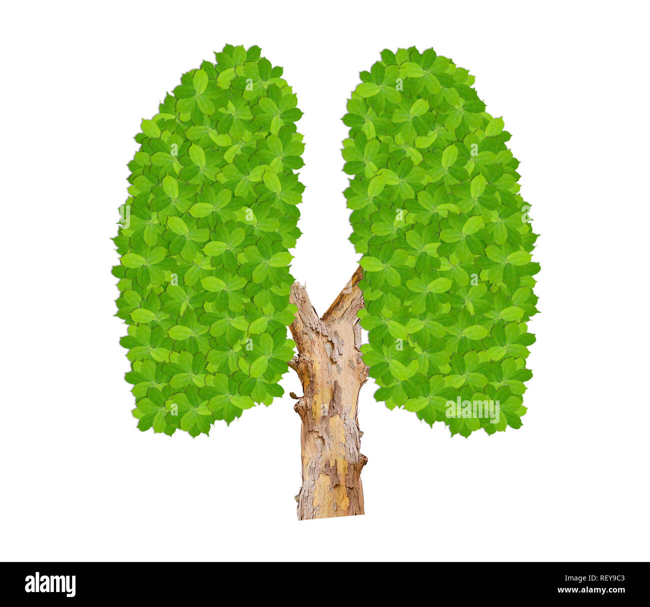 Green leaves lungs like symbol of ecology clean environmental isolated on white - Stock Image