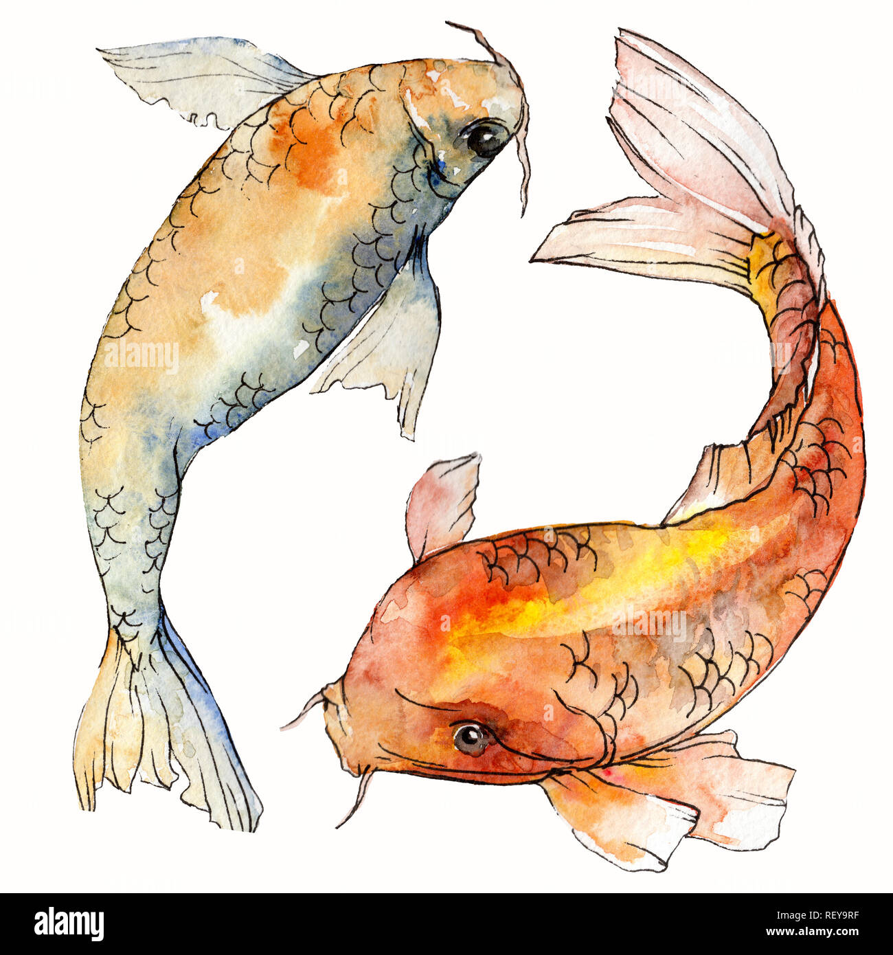 Watercolor aquatic underwater colorful tropical fish set. Red sea and exotic fishes inside: Goldfish. Aquarelle elements for background, texture. Isol Stock Photo