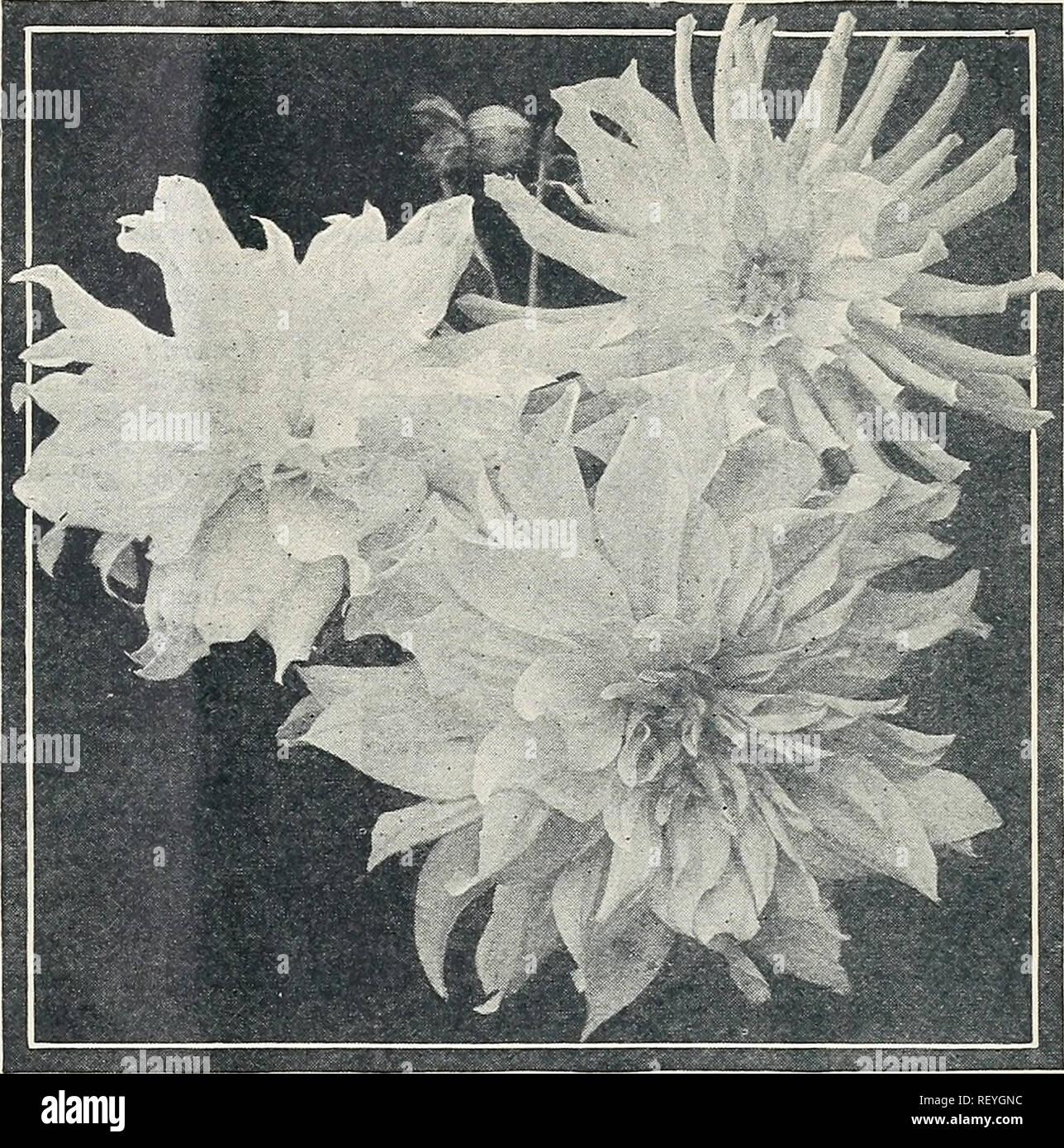 Dreer S Novelties And Specialties 1934 Flowers Seeds Catalogs