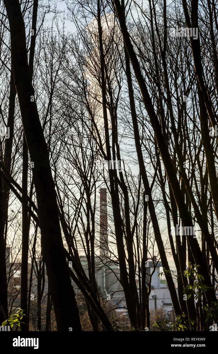 View of a smoke stack as seen through a forest of Spring trees before they sprout their leaves, Seattle, WA USA - Stock Image