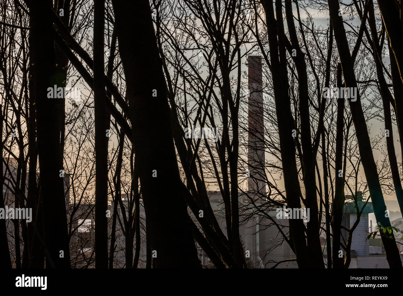 View of a smoke stack as seen through a forest of Spring trees before they sprout their leaves, Seattle, WA USA Stock Photo